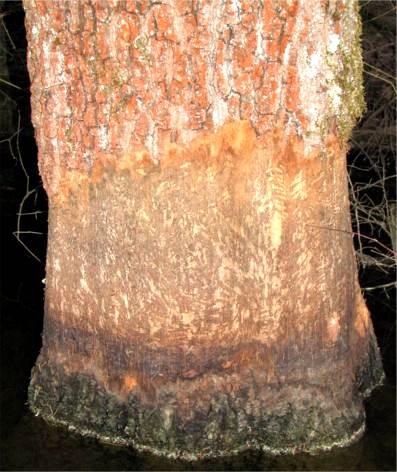 bäume fällen vogelschutz